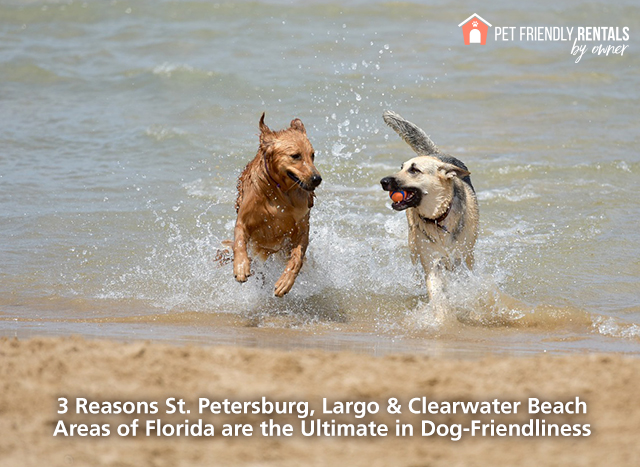 dog-friendly-stpete-largo-clearwater