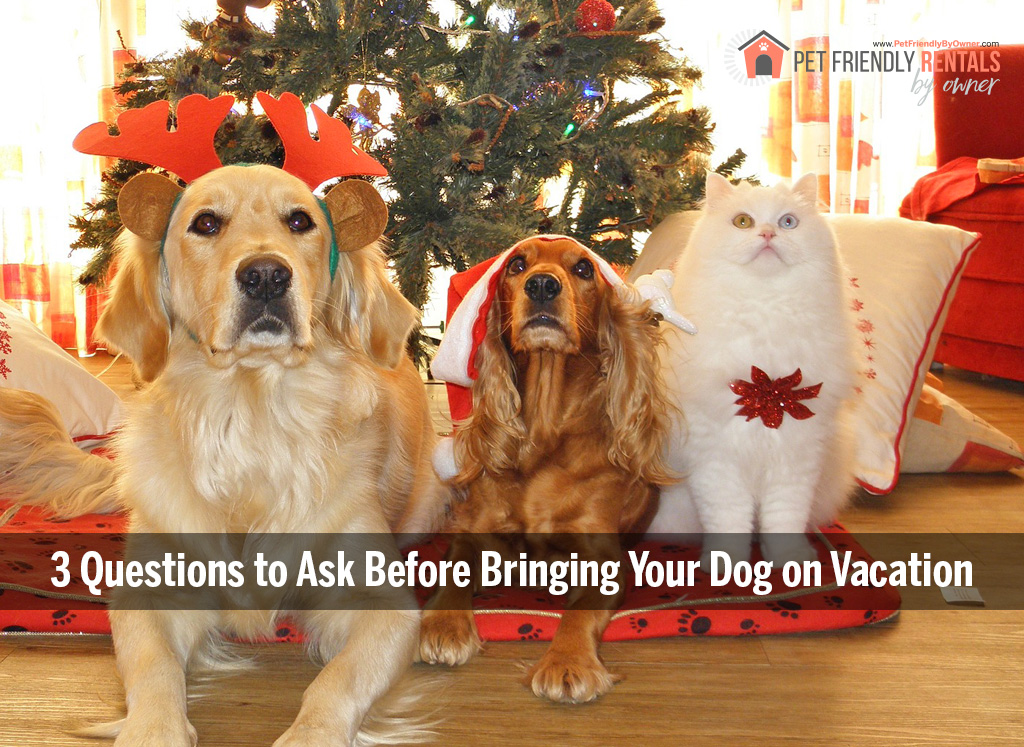 three questions to ask before bringing your dog on vacation