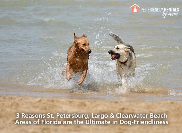 dog-friendly-stpete-largo-clearwater