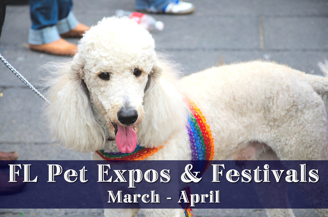 Florida Pet Expos & Festivals - March & April