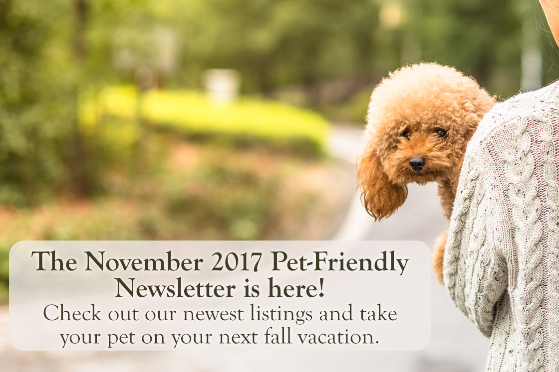 November Pet Friendly Newletter