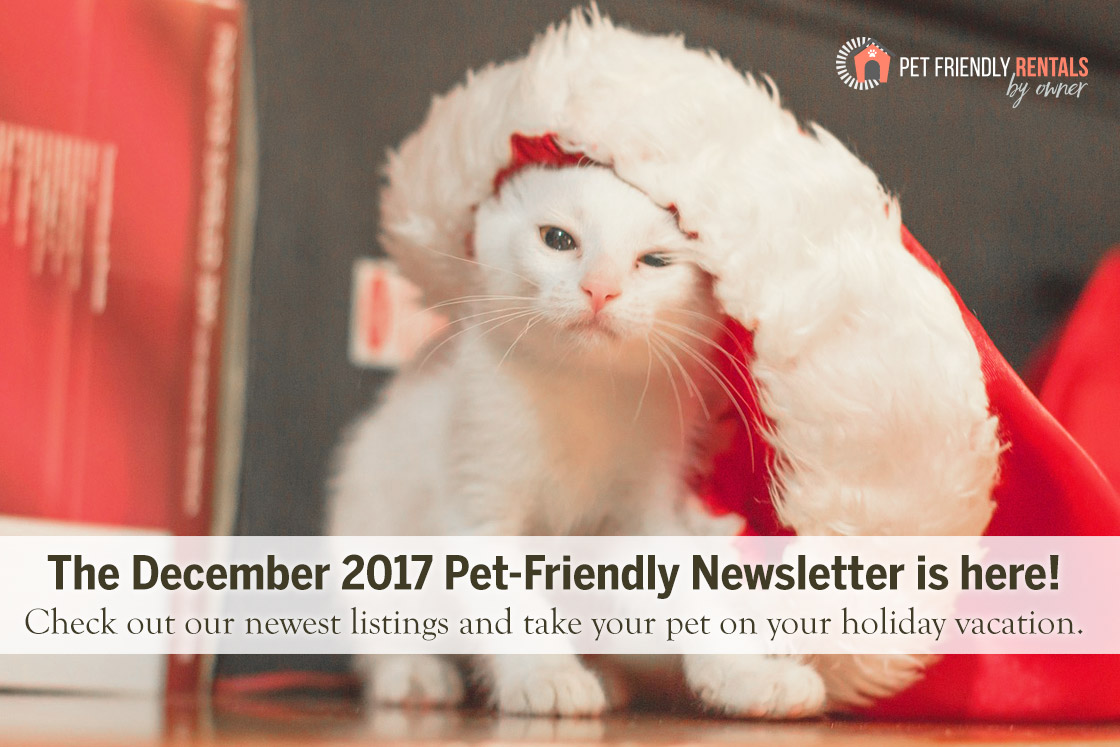 pet friendly vacation rentals for december