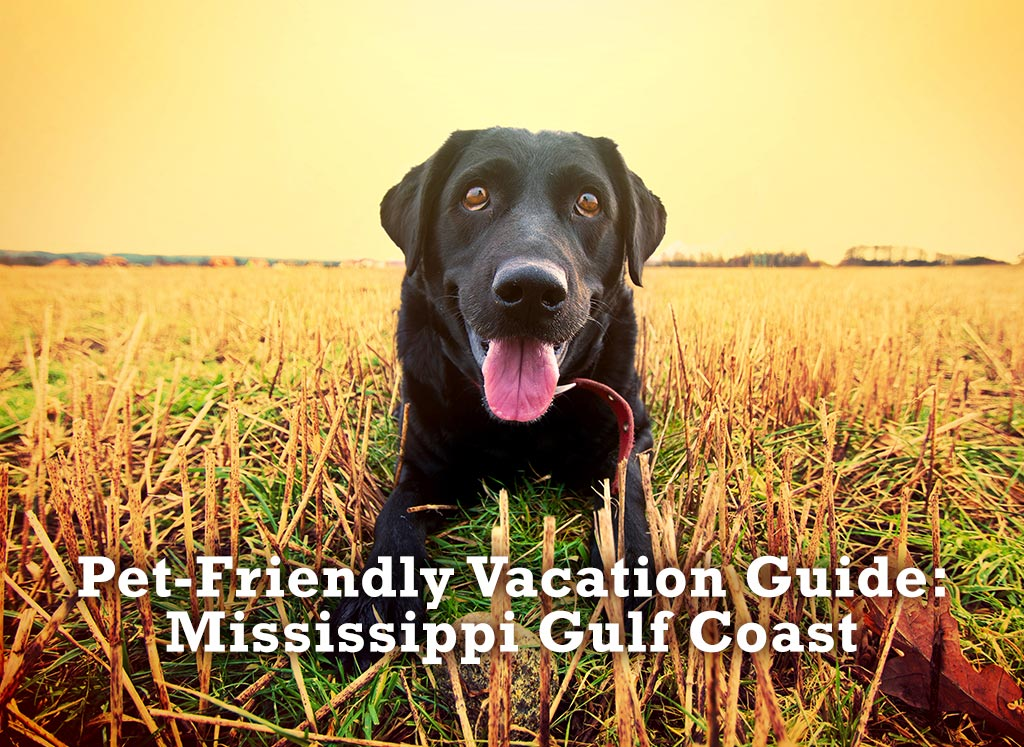 Pet Friendly Vacation Guide
