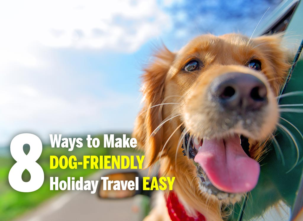 Dog friendly holiday travel