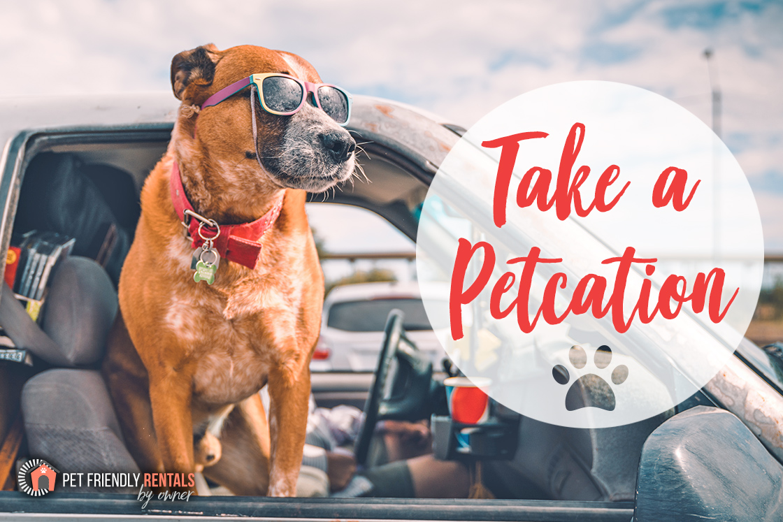 Spring 2019 Pet Friendly Vacation Rental Newsletter