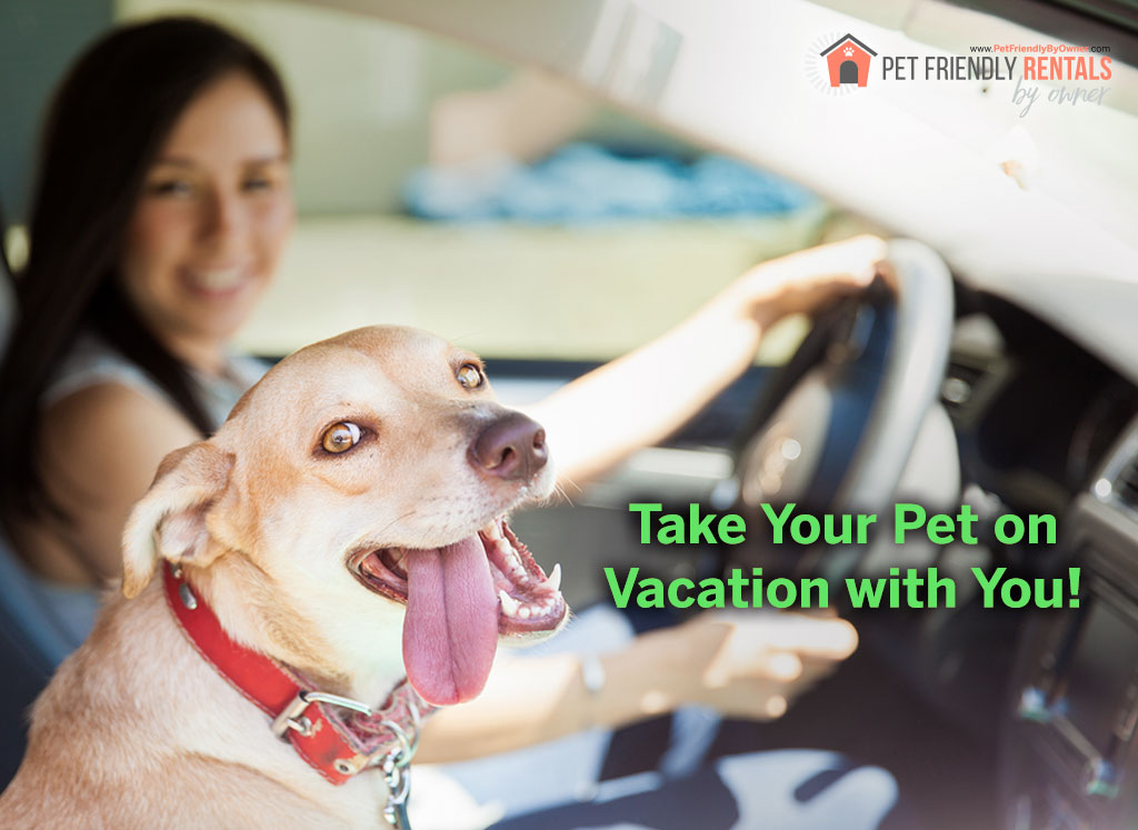 bring-pet-on-vacation