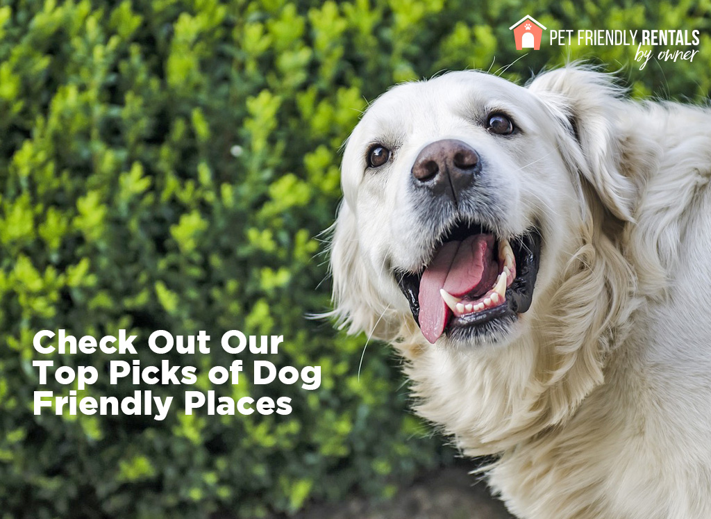 traveling with pets on holiday vacation